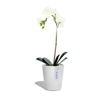 ECOPOTS Morinda orchid pot White
