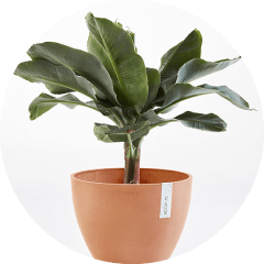 Discounted ECOPOTS